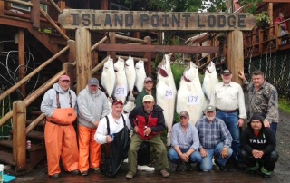 A group of men sitting in front of a large haul of halibut caught on an Alaska fishing trip.